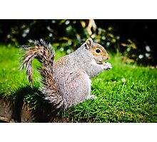 Squirrel @ Regents Park 1 Photographic Print
