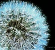 Kathie McCurdy Dandelion Seed Head by Kathie McCurdy