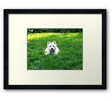 Master of grass Framed Print
