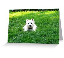 Master of grass Greeting Card