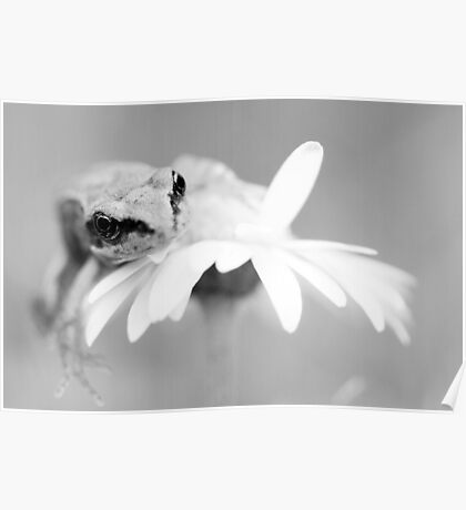 Baby Frog Poster