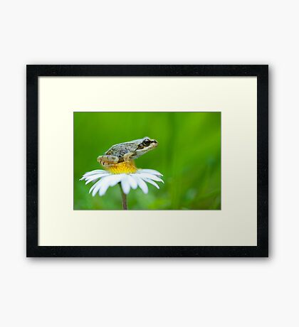 Waiting to leap Framed Print