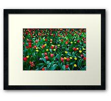 Tulips @ Keukenhof Framed Print