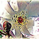 Dreamy roses by KatarinaD