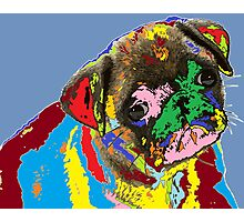 puppy Portrait 09 Photographic Print