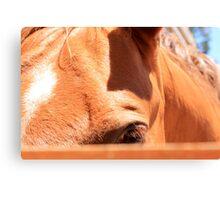 Shy Horse Canvas Print
