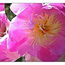 Pink Summer Dream by KatarinaD