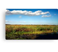 Alligator on Floodplain. Wetlands Park. Canvas Print