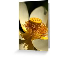 0696 White Lotus  Greeting Card