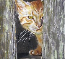 Tabby Cat by Michelle Potter