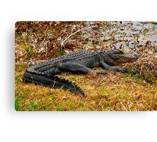 Aliigator Portrait #1. Wetlands Park.  Canvas Print