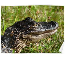 Alligator Portrait #2. Melbourne Shores. Poster