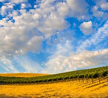 Vineyards by Radek Hofman