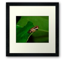 Tree Frog Portrait #1. Framed Print