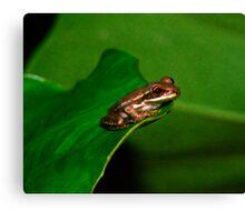 Tree Frog Portrait #1. Canvas Print