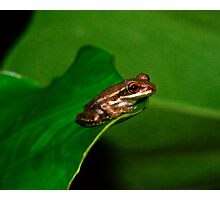 Tree Frog Portrait #1. Photographic Print