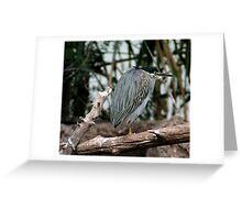 Striated Heron Greeting Card