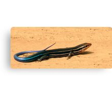 Five Lined Skink. Canvas Print