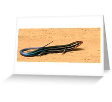 Five Lined Skink. Greeting Card
