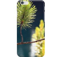 pine needles iPhone Case/Skin