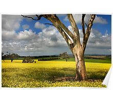 Tree in Canola Field Poster