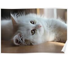Thor The Kitten Poster