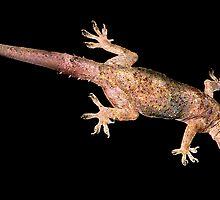 Mediterranean Gecko. by chris kusik