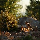 Fawns - Reno, Nevada by Richard Rushton
