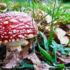 Fairy Toadstool by haymelter