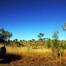 Landy in the bush and wilderness of Arnhem Land by georgieboy98