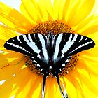 I May Be Black & White but I Prefer Color . . . by Tim Scullion
