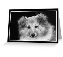 Sheltie Head in Black and White Study Greeting Card