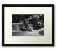 Rainforest gallery Framed Print