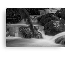 Rainforest gallery Canvas Print