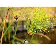 Pond Water Plants Green Photographic Print
