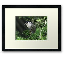 Watcher in the Reeds Framed Print