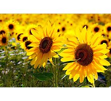 Sunny delight  Photographic Print