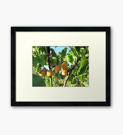 Fruits of nature Framed Print