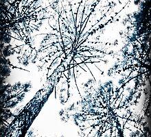 Pinetree by sunrose