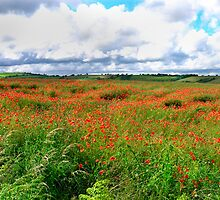 Poppy Field Skies-moving light. by rennaisance
