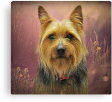 Aussie Dog! Canvas Print