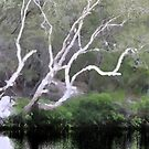 Tree at Noosa River by Ali Choudhry
