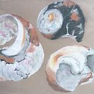 Shell studies by Hannah Clair Phillips