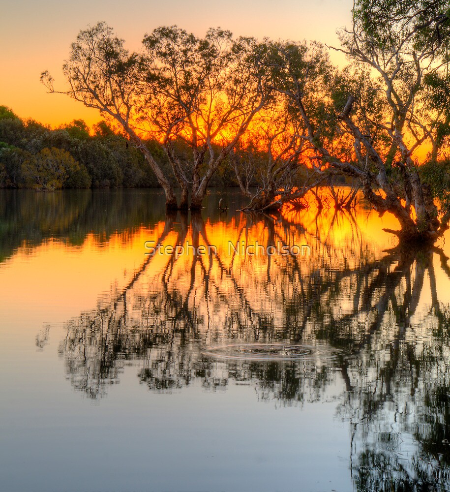 Paper Barks at Sunset in the Nicholson River by Stephen  Nicholson