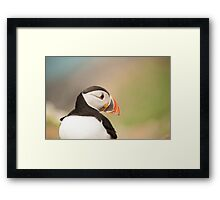 Puffin Profile Framed Print