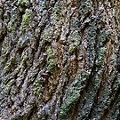 Tree Texture #4 by Ray Fowler