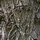 Tree Texture #5 by Ray Fowler