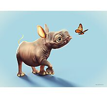 Baby Rhino and Butterfly Photographic Print