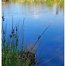 River Run by Dave  Grubb