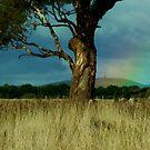 Gum Tree by Digby